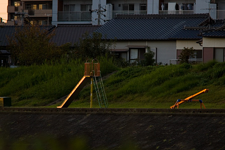矢田川鳥撮り-6