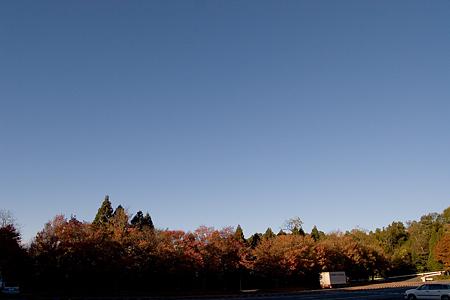 森林公園紅葉前-3