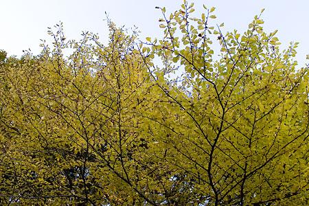 森林公園紅葉前-4