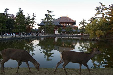 奈良の鹿コレクション-1