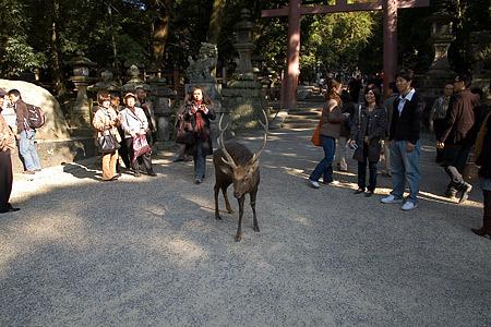 奈良の鹿コレクション-5