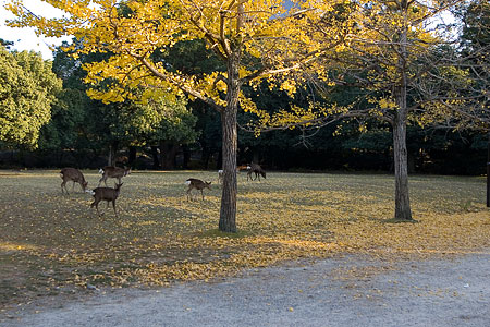 奈良の鹿コレクション-9