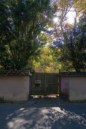 奈良紅葉風景-6