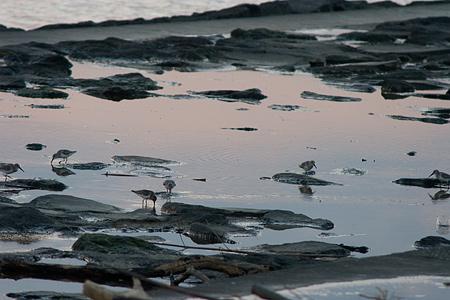 葛西臨海の鳥たち1-10