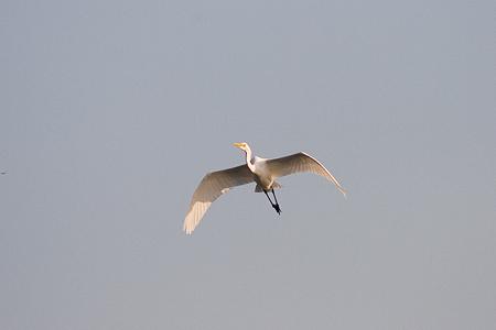 葛西臨海の鳥たち1-7