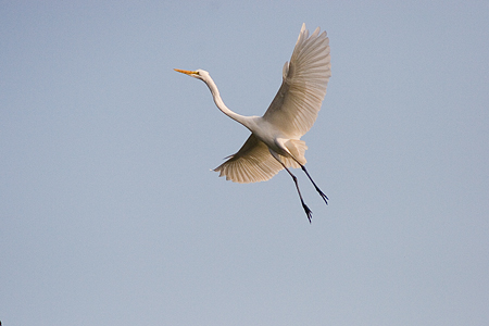 葛西臨海の鳥たち1-8