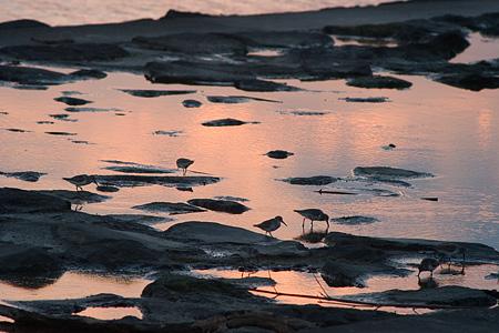 葛西臨海の鳥たち2-10