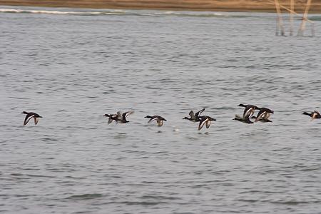 葛西臨海の鳥たち2-6