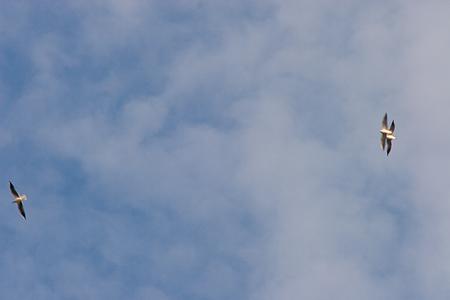 葛西臨海の鳥たち2-7