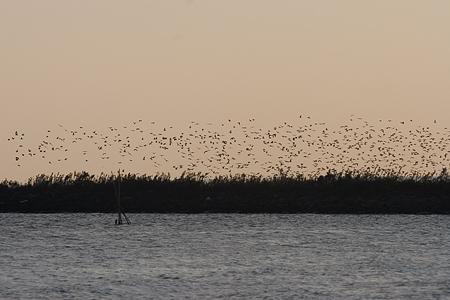 葛西臨海の鳥たち2-9