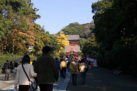 鶴岡八幡宮の秋-1