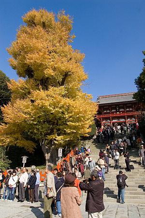 鶴岡八幡宮の秋-3