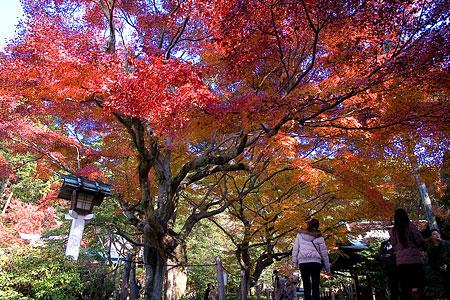 鎌倉宮-5