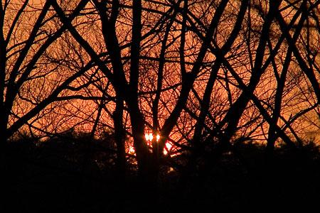 小幡緑地の日没