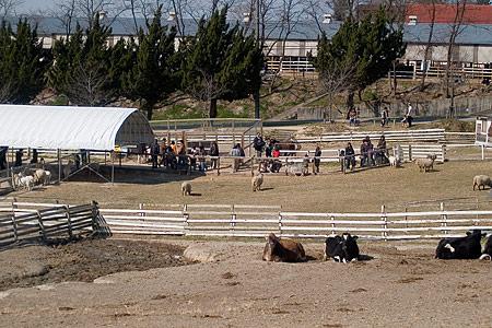 アイボクの動物広場