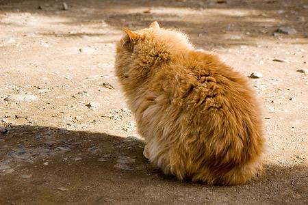 根津神社の猫
