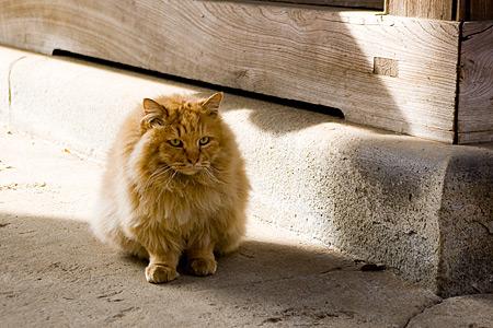 根津神社の猫-1