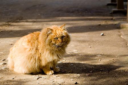 根津神社の猫-2