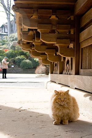 根津神社の猫-3