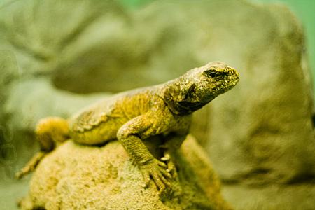 東山自然動物館-5