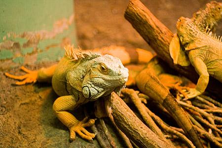 東山自然動物館-6