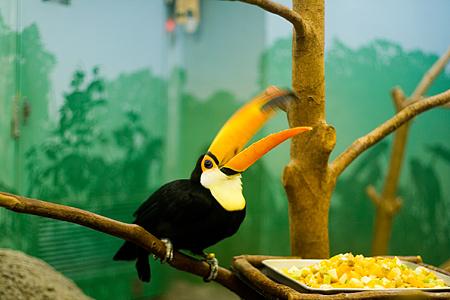 自然動物館の鳥