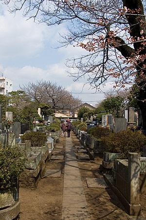 禅林寺の桜とお墓