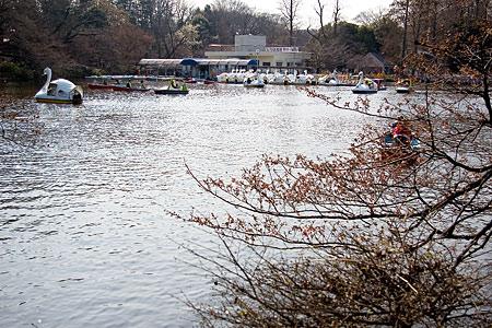 井の頭池の桜とボート