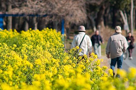菜の花庄内緑地