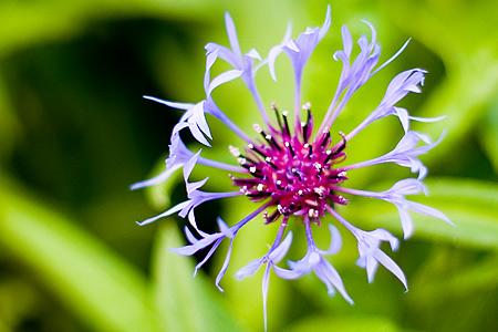 東山植物園花-2