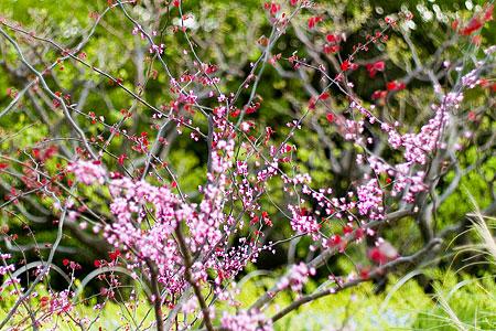 東山植物園花-4