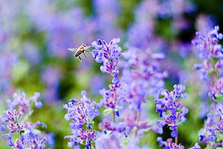 東山植物園花-5