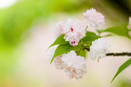 東山植物園花-6