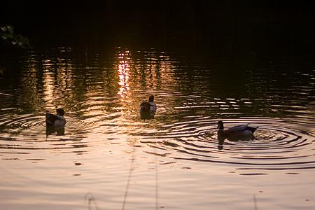 牧野ヶ池緑地-2