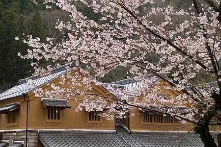 三州足助屋敷の桜