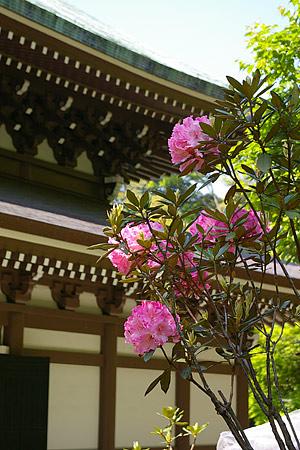鎌倉の花-1
