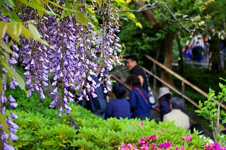 鎌倉の花-2