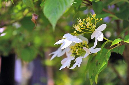 鎌倉の花-3