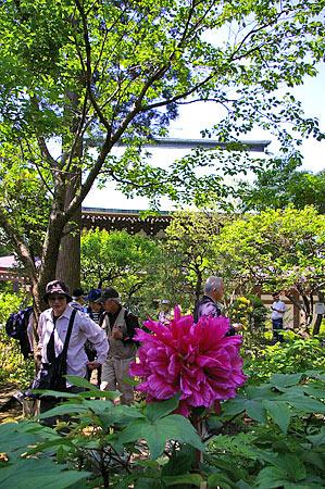 鎌倉の花-4