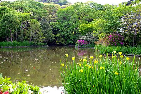 鎌倉の花-5