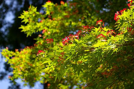 鎌倉の花-7