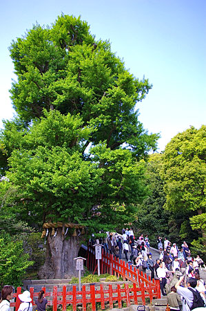 鶴岡八幡宮-3