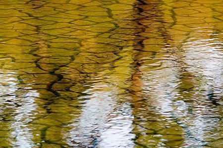 小堤西池風景-2