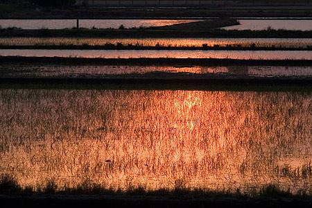 小堤西池風景-7