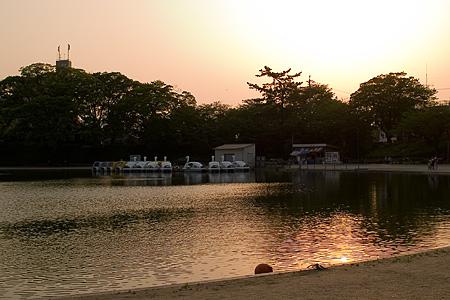 天王川公園の藤-6