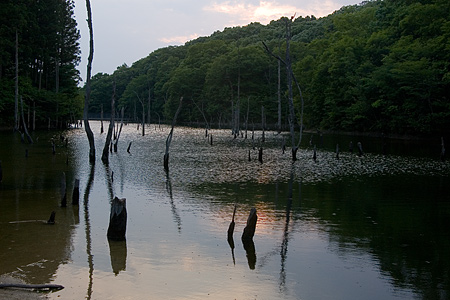 初夏の海上の森-9