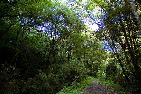 森の光と影-1