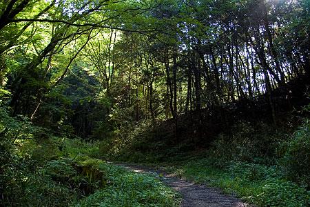 森の光と影-3