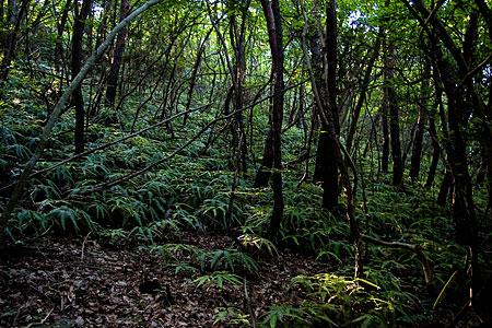 森の光と影-5