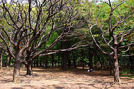 代々木公園風景-5